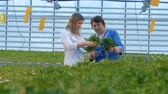 alimentação : Greenhouse farmers are looking upon tufts of green lettuce and talking