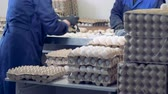 farmhouse : A group of farmhouse employees are filling carton containers with eggs from a tray