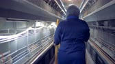 wheeled : Aviary specialist is walking and looking very attentively at the chickens Stock Footage
