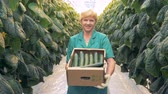 brushwood : Smiling female greenhouse worker is standing with a box full of cucumbers