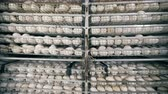 пищевой продукт : Metal containers filled with fresh white eggs