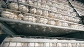 henhouse : Close up of rows of white eggs contained in metal trays