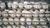 półka : Eggs stored on shelves at a poultry farm, close up. Wideo