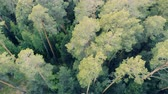brushwood : Top view of a green forest with tall trees