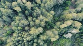 oksijen : Multiple crowns of forest trees in a view from above Stok Video