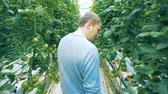 supervise : A man in a greenhouse. Stock Footage