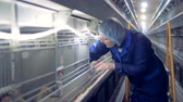 henhouse : Baby chicken is getting put out of the cage and inspected by a henhouse worker