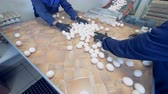 economia rural : Farm workers sort many eggs on a tray near a conveyor. 4K.