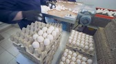 karton : Workers put eggs into cardboard boxes near a metal conveyor at a farm. 4K.