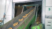 alimentação : Industrial conveyor is relocating potatoes into storage facility Stock Footage