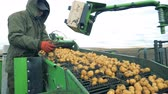 alimentação : Rubbish is getting taken away from the conveyor with potatoes by a man. Harvesting concept.