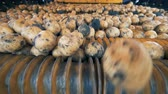 клубень : Potatoes are rolling down inside of an industrial machine. Agriculture farming concept.