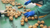 tubers : Agriculture farming concept. Potato tubers are getting removed from the factory conveyor. Stock Footage