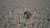 shortage : One man checking field with failed crops. Global warming concept. Stock Footage