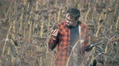 crop loss : Professional farmer holds a dried sunflower in hands, then types on a tablet.