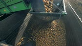ve slupce : Lots of potatoes falling into a container, close up. Dostupné videozáznamy
