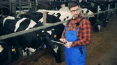 cattle breeding : Specialist is inspecting chewing cows while holding a tablet