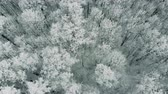 alasca : Winter forest with snow-covered trees, slow motion, aerial shot. Vídeos