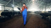obora : A worker checking cows in a byre, back view.