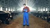 kůlna : Man types on a tablet, standing in a cow barn, close up.