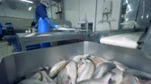 cutting fish : Fish is stocked in the container and some of them are getting cut Stock Footage