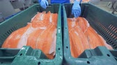 cartilaginous : Pieces of trouts fillets are getting relocated from one container into another one