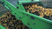 potato harvest : Tractor conveyor moves potatoes on a field, close up. Stock Footage