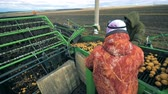 tubers : People work with potato, sorting it on a tractor conveyor, close up.