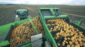 картофель : A tractor with conveyor moving potatoes, close up.