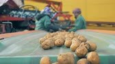 сортировать : Workers sort potatoes in a facility, close up.