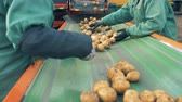 kůlna : Factory workers sorting potatoes on a moving conveyor, close up.