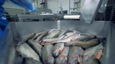 zalm : Factory worker is removing trouts from the joint pile