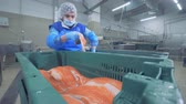 processado : Factory specialist is relocating pieces of trout from one container to another one