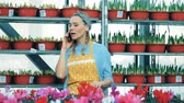 horticultura : Greenhouse worker speaks on the mobile phone while standing near cyclamen. Stock Footage