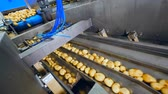 ducts : Potatoes are falling into ducts of the conveyor Stock Footage