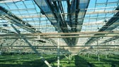 espaçoso : Spacious greenhouse with plenty of seedlings
