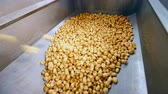 tanklager : Metal container is getting filled with potato tubers