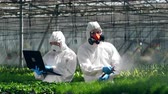 毒性 : Greenery employees are sprinkling and observing plants. Poison, pesticide in food concept.