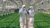 毒性 : Two agronomists are pumping pepper with pesticides. Poison, pesticide in food concept.