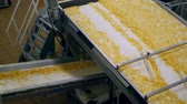 tubero : Factory conveyor moves lots of fried chips.