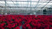 espaçoso : Spacious greenhouse with plenty of beautiful flowers