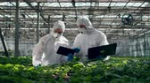 sicurezza alimentare : Greenery and two agronomists working on laptops and talking