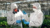 plant fertilizer : Agronomists are working with plants and chemicals Stock Footage