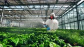 plant fertilizer : Biologist is washing greenhouse plants with chemicals Stock Footage