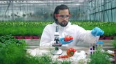 biochemie : Tomatoes are getting tested with chemicals by a male biologist