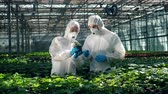 plant fertilizer : Chemists in safety wear are observing a plant