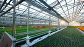 biochemie : Massive glasshouse with various blooming flowers Dostupné videozáznamy