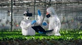 biotechnológia : Two scientists are holding a digital research in the greenhouse
