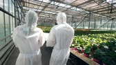 plant fertilizer : Two agronomists are walking along the greenery in a backside view