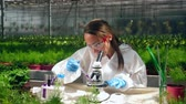 horticultura : Glasshouse worker is using a microscope to test chemicals Stock Footage